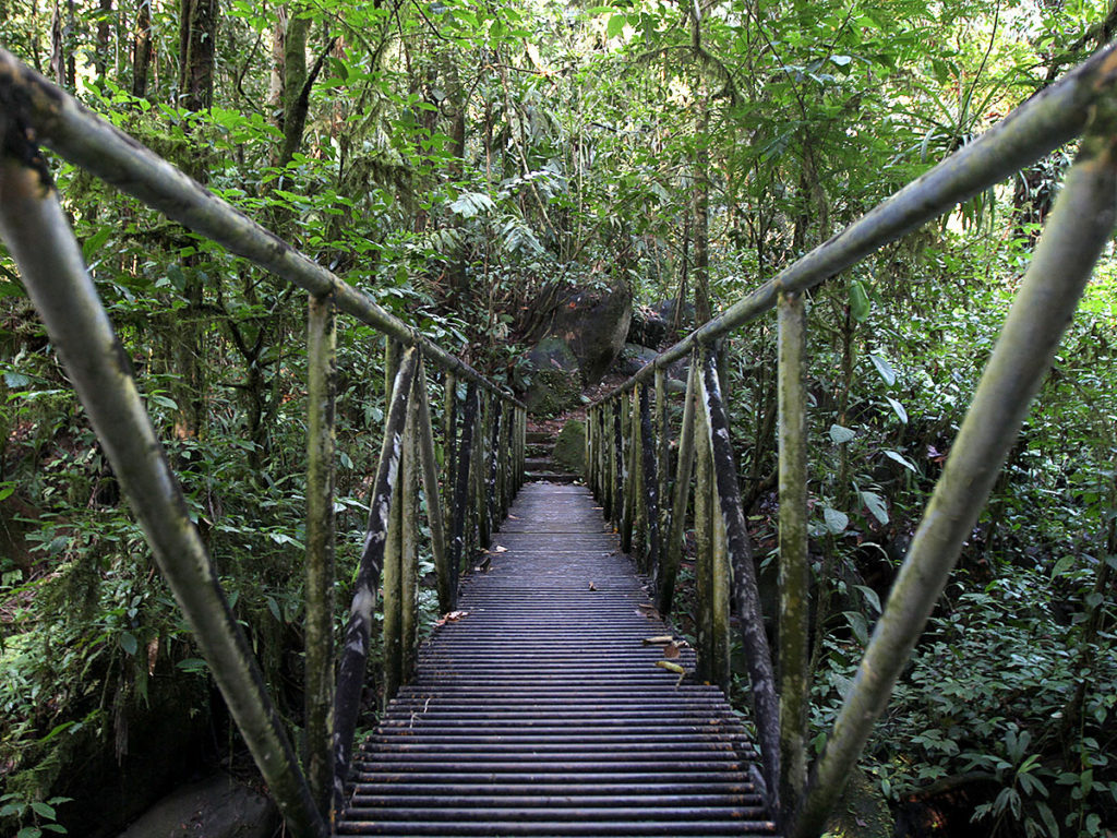 gssnworkshopbridgeforest